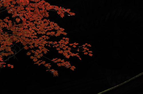 2010koyo_003.jpg