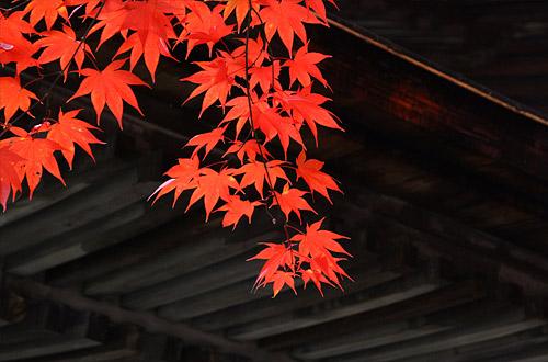 2010koyo_007.jpg