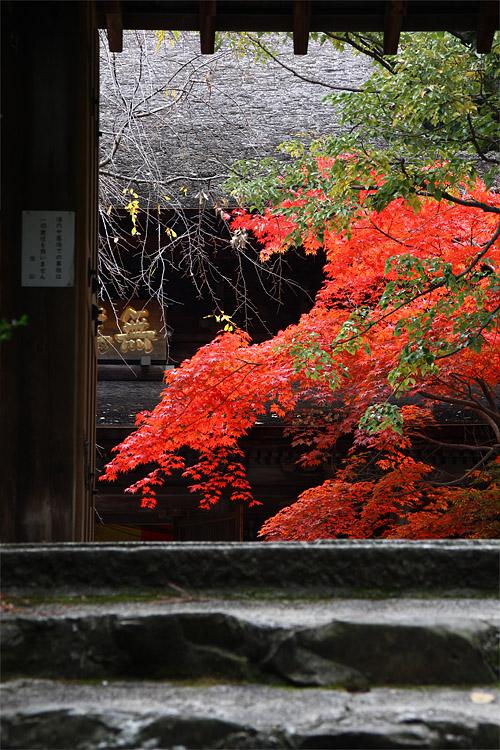 2010koyo_008.jpg