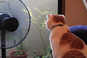 cat_002.jpg