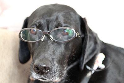 このインテリジェンスなメガネの