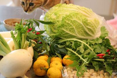 お野菜。。。宝の山