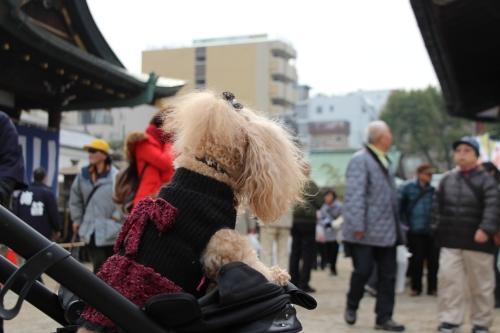 大阪天満宮 節分祭