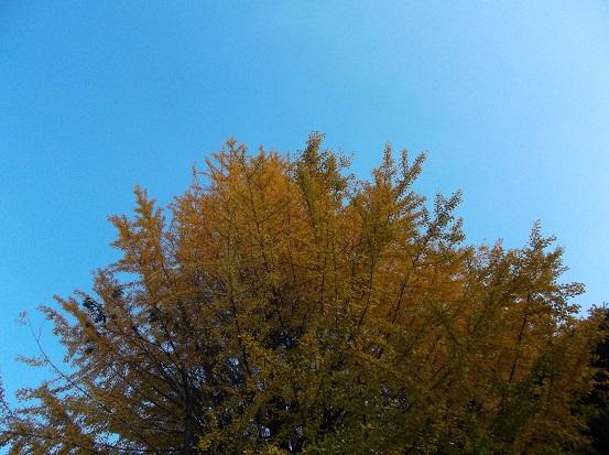 樹2778