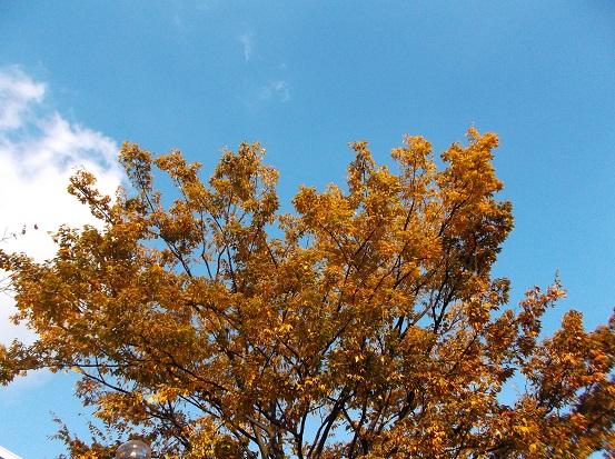 樹2740
