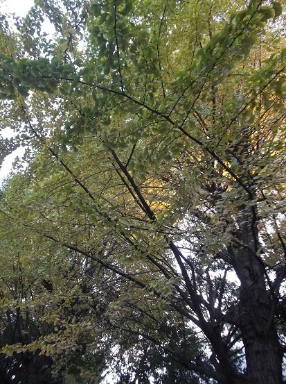 樹2727