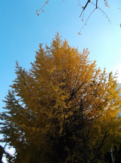 樹2770