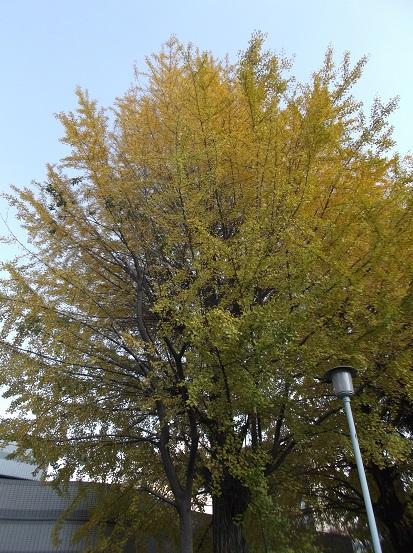 樹2781