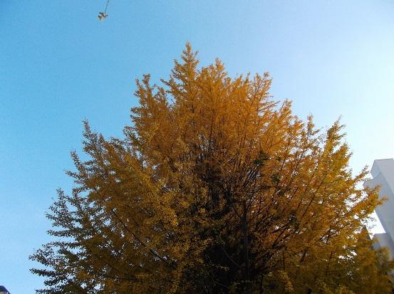 樹2772