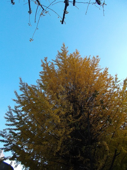 樹2775