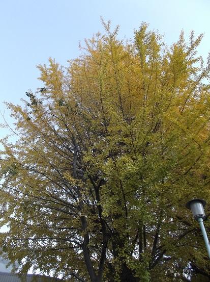 樹2782