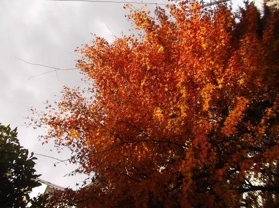 樹2966