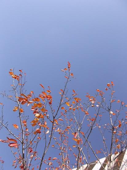 樹2915