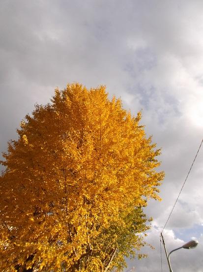 樹2984