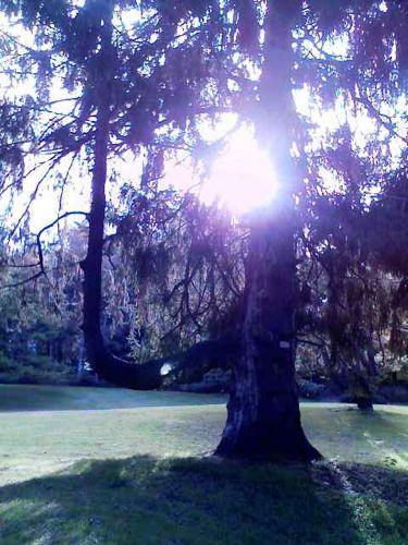 植物園の木