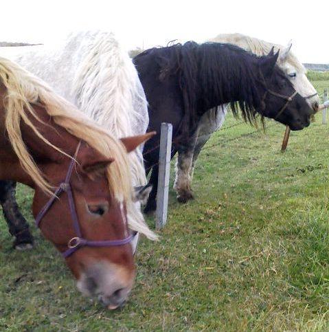道産子馬2