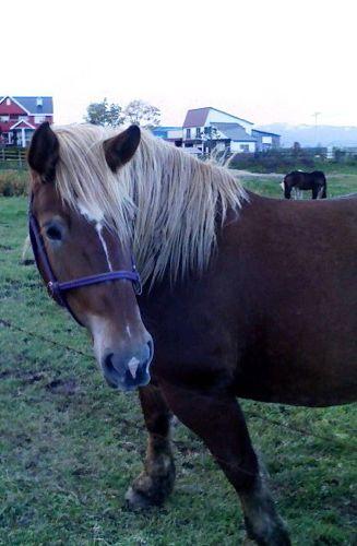 道産子馬1