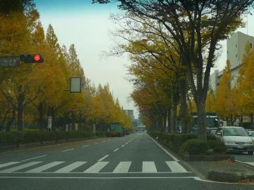 sP1180140.jpg