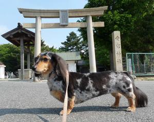 お散歩1P1050387