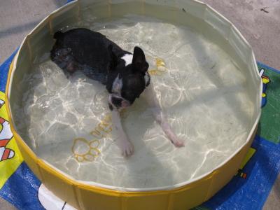 僕 小さいプールなんて許せないよ!!
