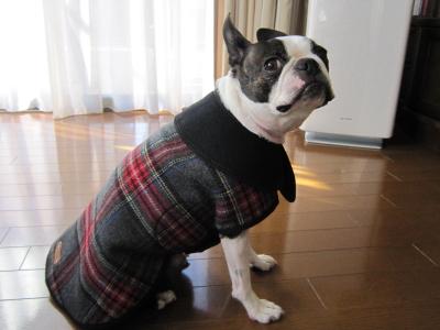 僕 ファッションショーなんて嫌いだ!!