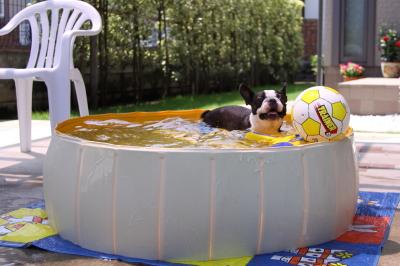 梅雨の合間にプール開きしました♪~♪