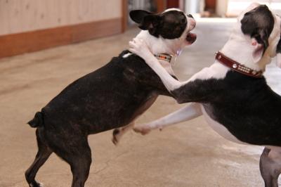 愛しの弟tango君