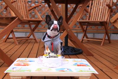 パンチ お誕生日 おめでとう♪~♪