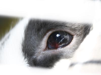 eye-1.jpg