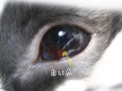 eye-2.jpg