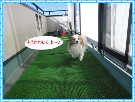 CIMG1160_20130201230936.jpg