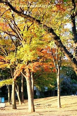 秋★2014