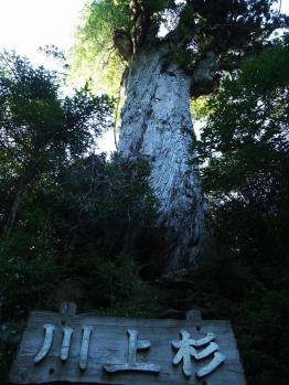 屋久島 143