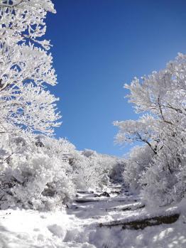 雪の韓国 062