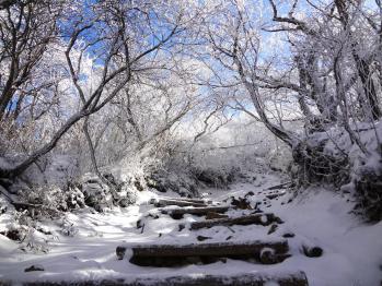 雪の韓国 014