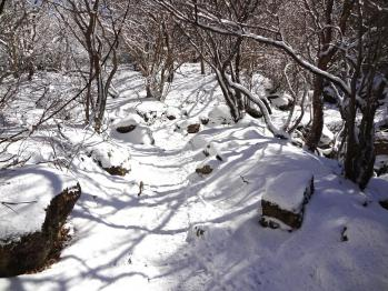 雪の韓国 011