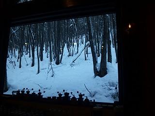 121129森の時計中からの風景