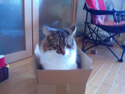 箱なら何でも。