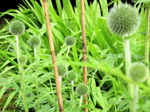 ワーズワースの庭2