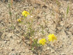 路傍の花 黄色