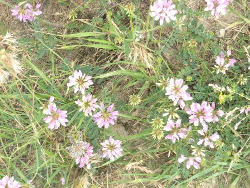 路傍の花 桃色