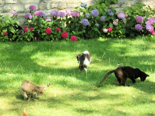 トプカプ宮殿の井戸端猫