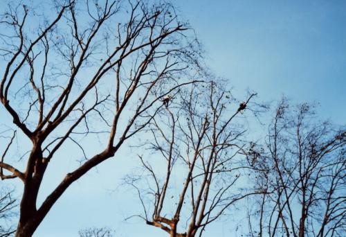 木の上に人