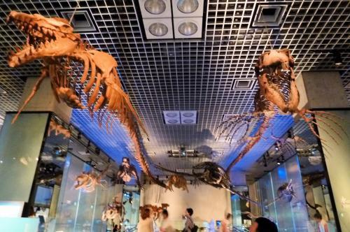 骨格標本・海