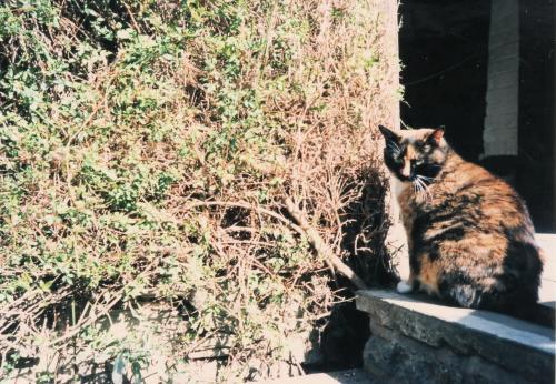 ストラトのネコ