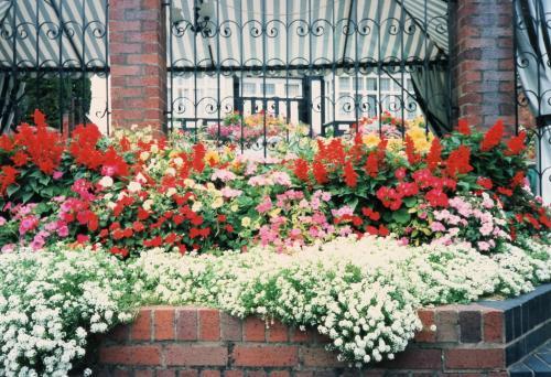 ストラトの花