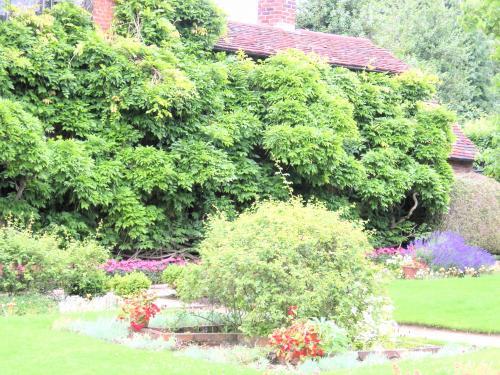 ナッシュの家の庭