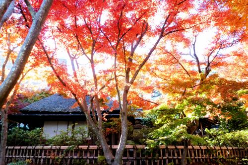 和室と紅葉