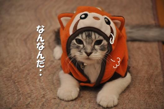 006_20110411110601.jpg
