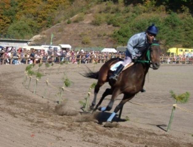 R 競走馬レース
